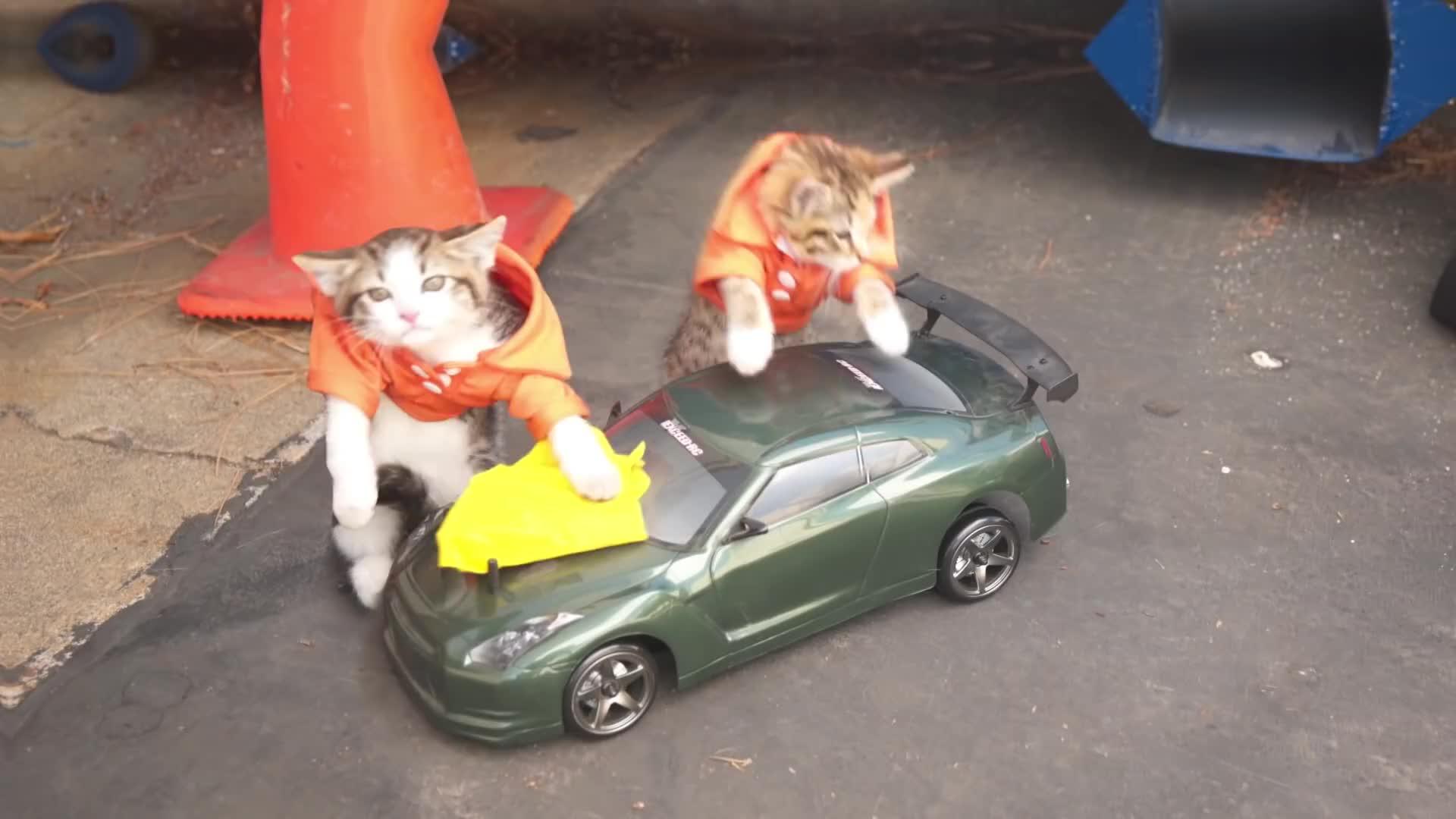 开敞篷跑车的蓝猫与骑电驴的猫咪竞速对决,最终的赢家却是斗牛犬