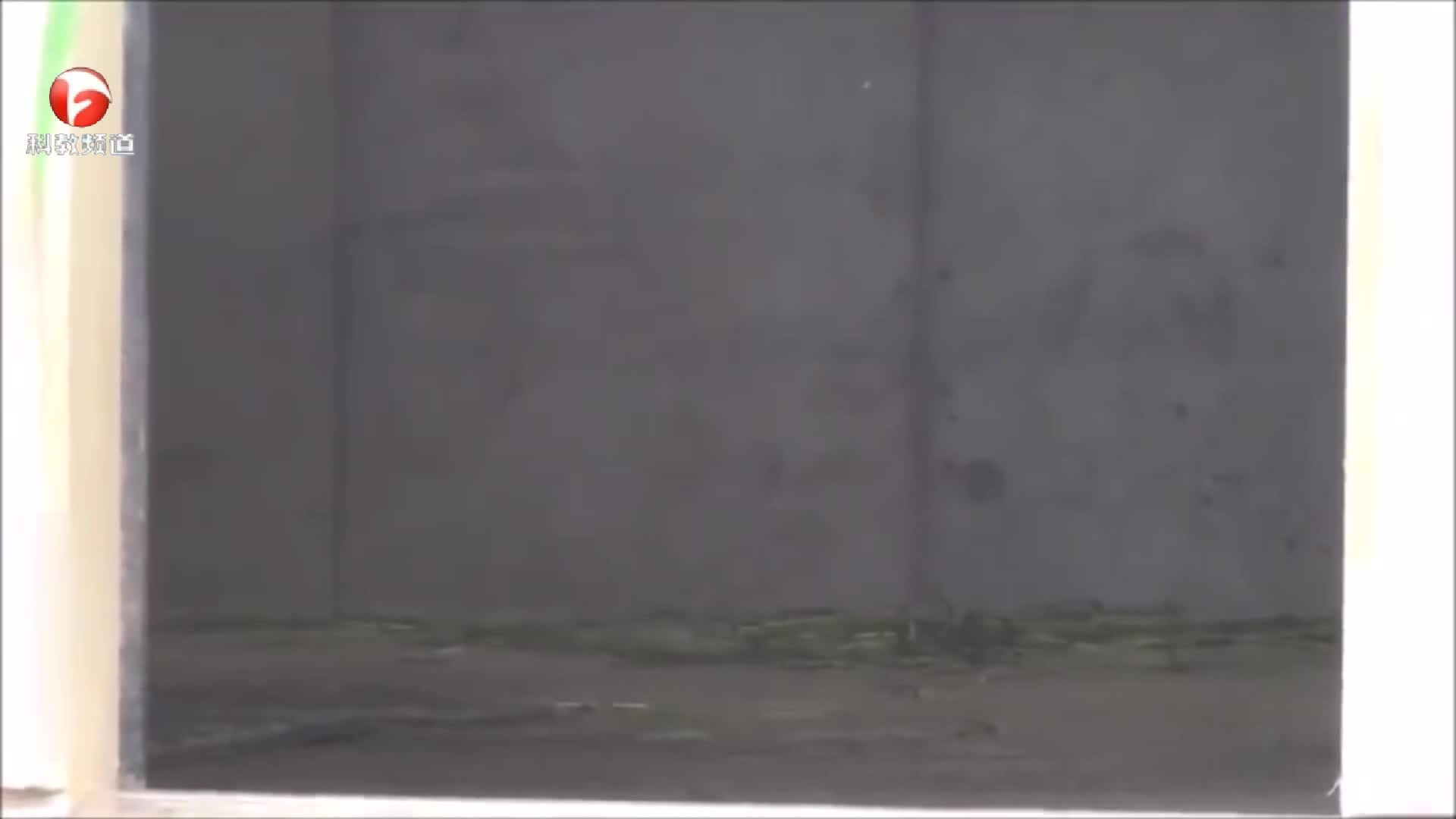 动物园里的一只黑豹,太霸气了,只可惜被关在了铁笼中