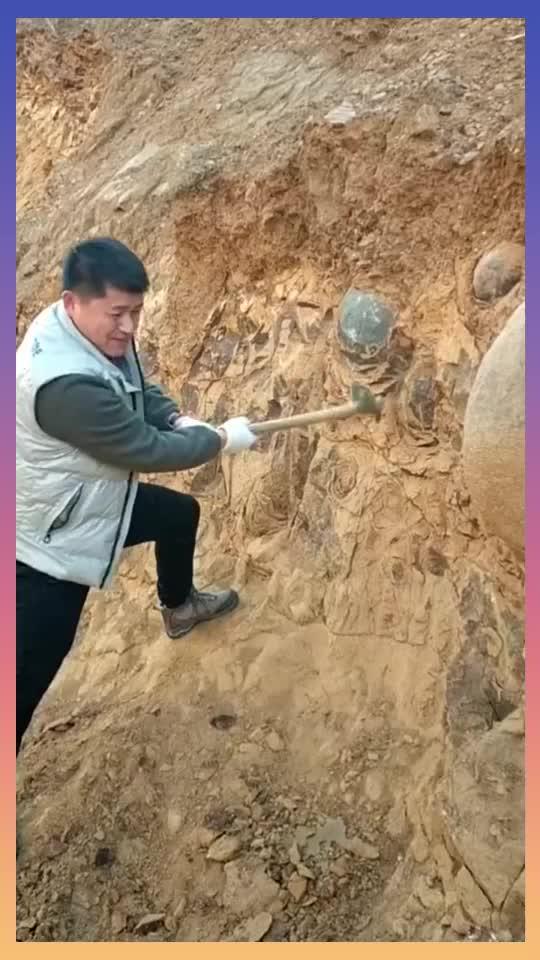 本来是开山造房子结果挖到了像恐龙蛋一样的石头