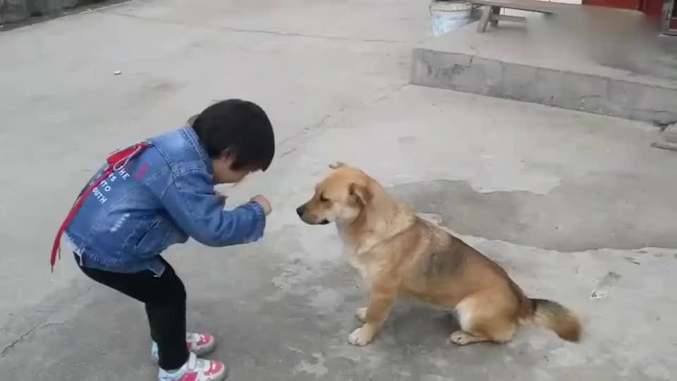 熊孩子遇到中华田园犬,交流起来竟毫无语言障碍,对话太魔性
