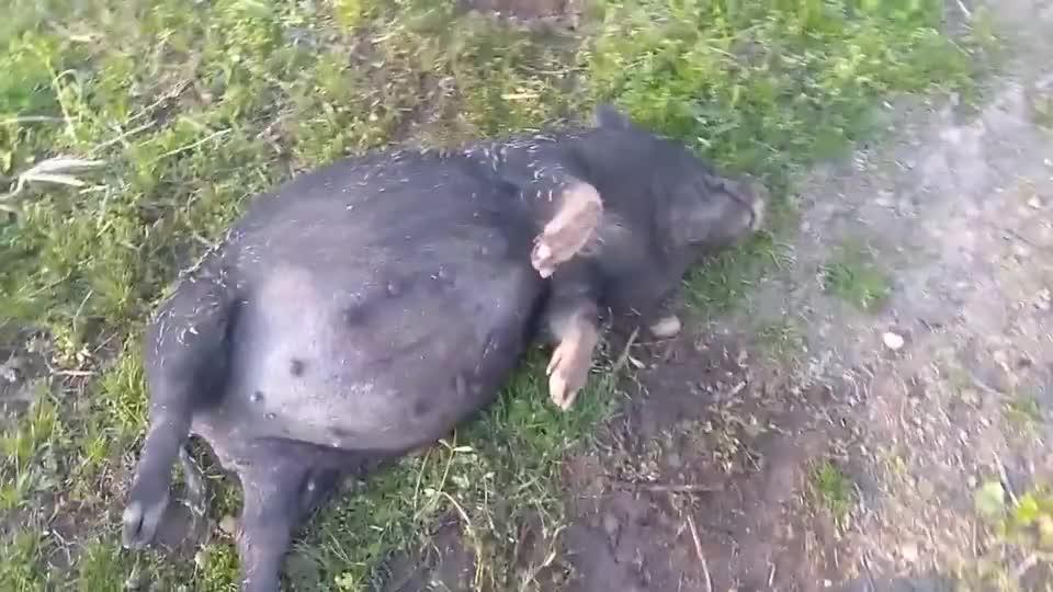 二师兄醉倒路边,路人上前推了一把,下一秒笑出猪叫声
