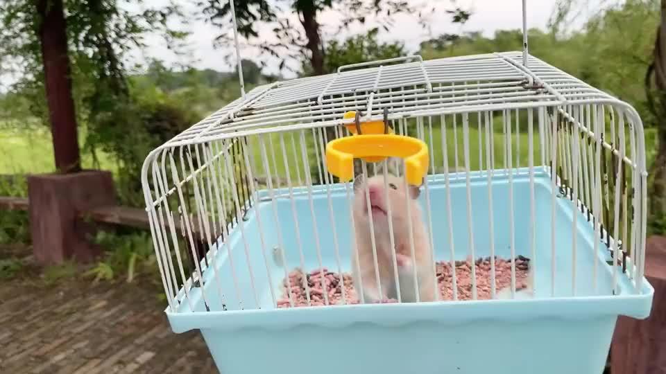 放暑假了,主人带小仓鼠去公园玩,小仓鼠高兴地东西都不想吃了
