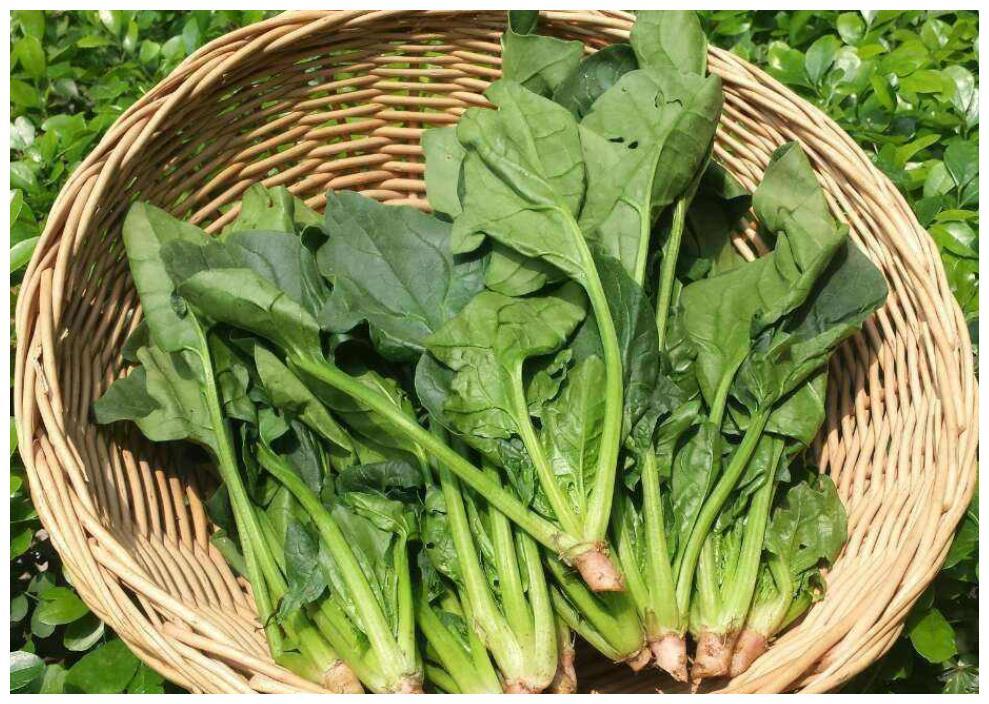 钟南山推荐10大健康食品,第3个接地气,正当季,5种做法任你选