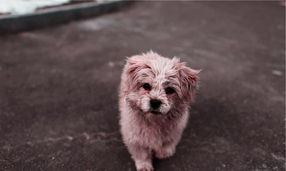 小狗帮老人拉车,得知实情后,我哭了!