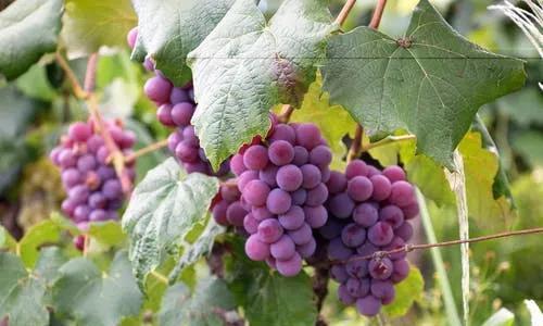 人人都该知道的葡萄酒小知识,爱喝葡萄酒的你可千万不要错过