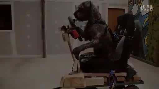 汪星人要逆天了,世界上第一个会驾驶汽车的狗!