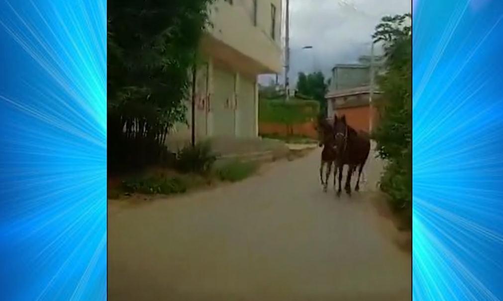 开车经过农村,一匹马直接撞碎挡风玻璃,马儿姿势很特别