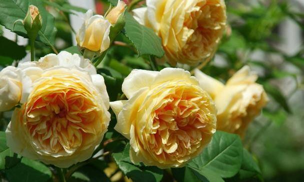 家养有些植物,阳台开出花海,绚丽多姿,疯狂开花,一养就上瘾!