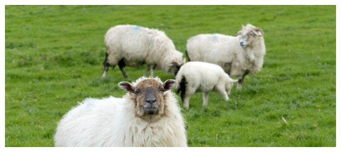 属羊人:1月21号起财气疯涨,大喜事上门,一路贵人运畅旺!