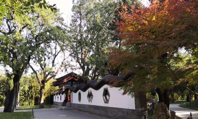 北京长安街的这个公园是赏银杏的好地方,当黄叶遇见红墙,太美了