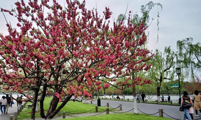 四月的杭州西湖美丽的风景,美人如玉变成画断桥的游客忆江南