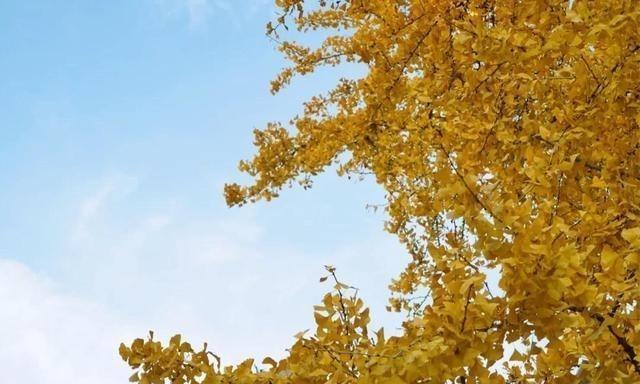 中国秋天最美的大学,一到秋天美到爆,连清华北大都黯然失色