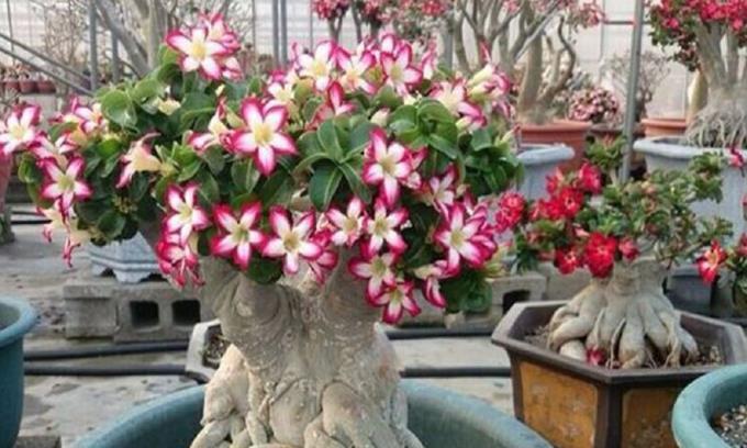 阳台有空别闲置!1种花不能错过,日常开花大半年,比吊兰好养!