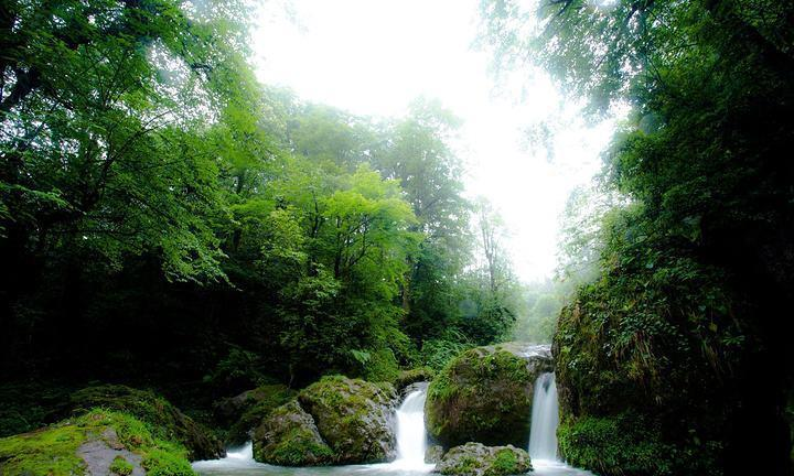 四川人不用去日本了,在四川就有宫崎骏动漫同款森林,坐落在雅安