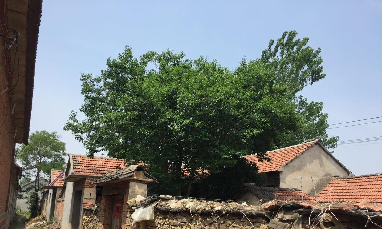 秋日的乡村午后,农家小院里的土方草药和四邻八乡的腰突百姓们