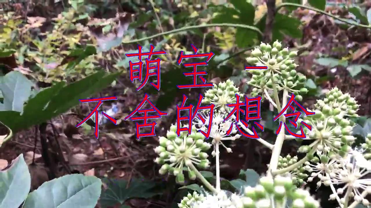 DJ何鹏的《萌宝 - 不舍的想念》,娓娓动听,清澈动听