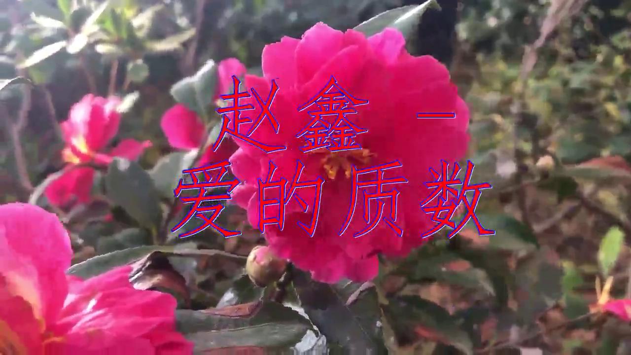 《赵鑫 - 爱的质数》,这歌声太美,听听绝对不后悔