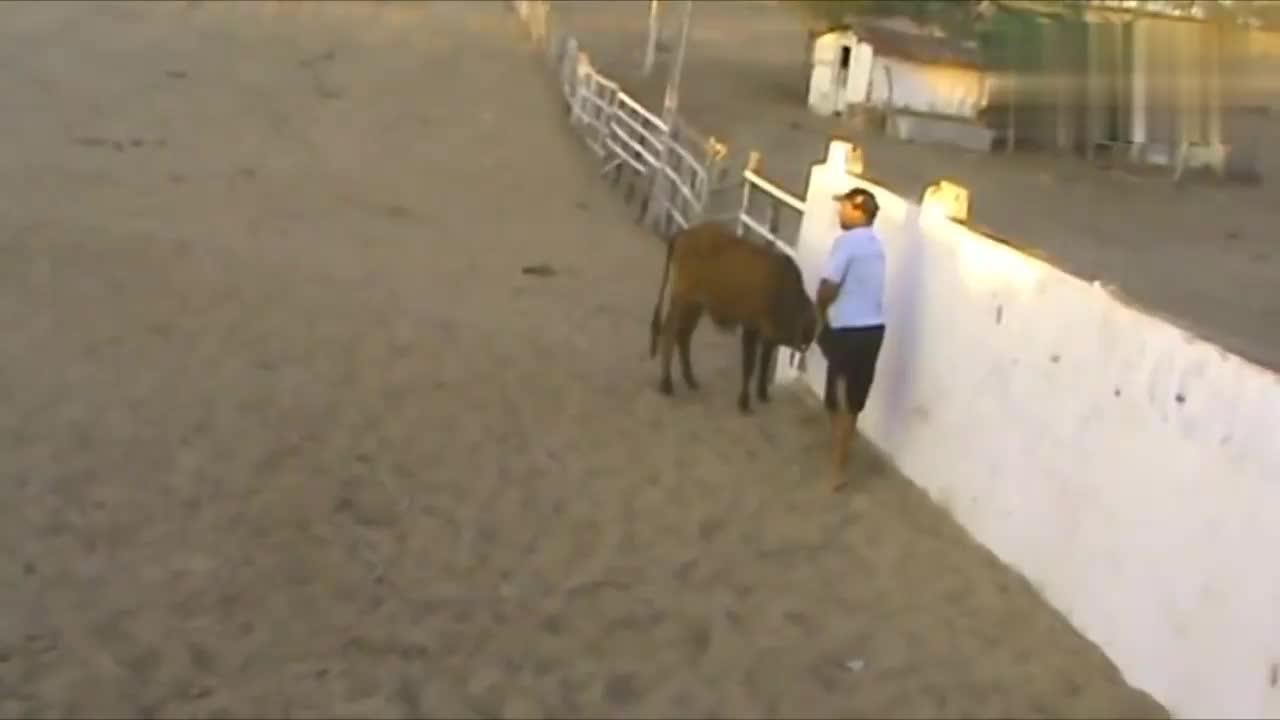 一匹暴脾气的马,没事喜欢追着牛打