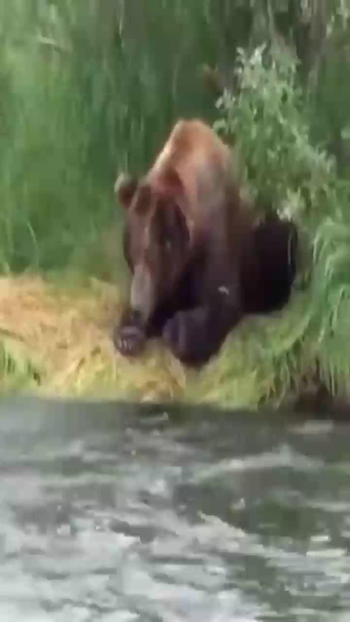 这熊瞎子捕鱼太厉害了我都想拜它为师了
