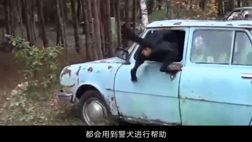 英国警犬退役后立马执行安乐死,中国警犬会怎样?看完拍手叫好
