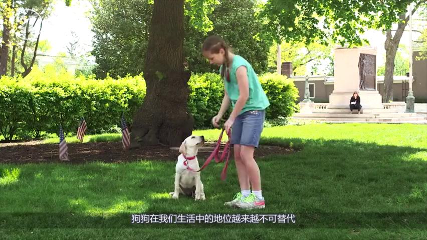英国警犬退役,就要立马安乐死,中国警犬的下场什么样呢?