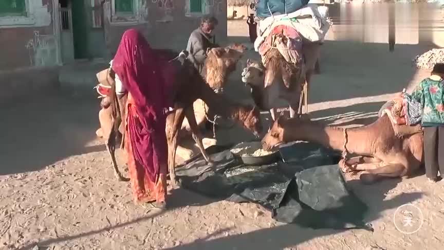 到印度,实拍印度的贫困农村,来看下他们是如何吃饭的