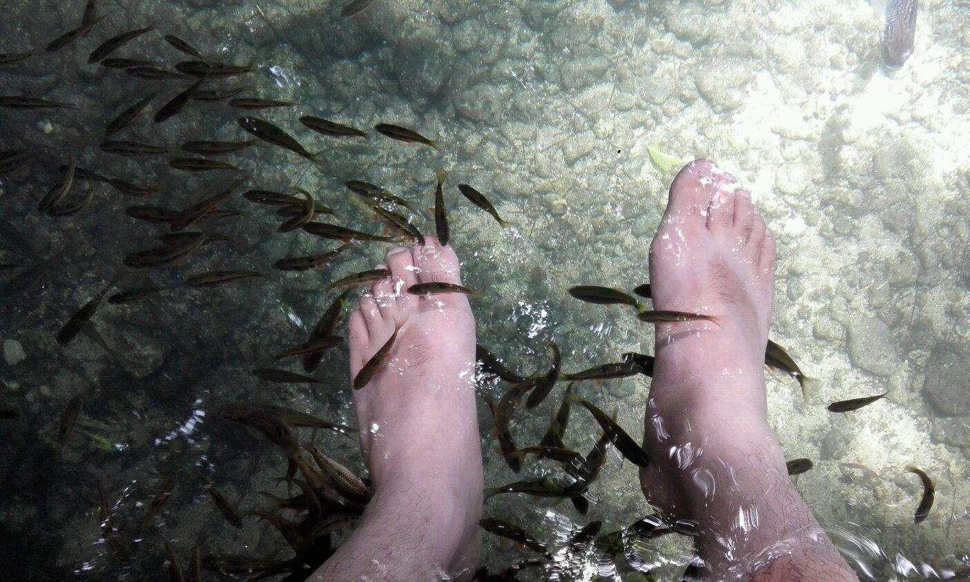 爱吃脚皮的温泉鱼到底有多恐怖?老外用大鱼测试,看完瑟瑟发抖