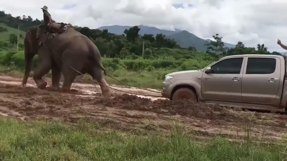 卡车陷在泥巴路无法动弹,大力水手出现的一刻,大象的霸气挡不住