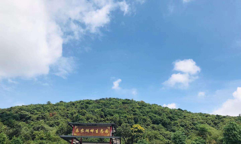 武汉放松心情的好去处,绿草如茵空气清新,组团出游的不二选择