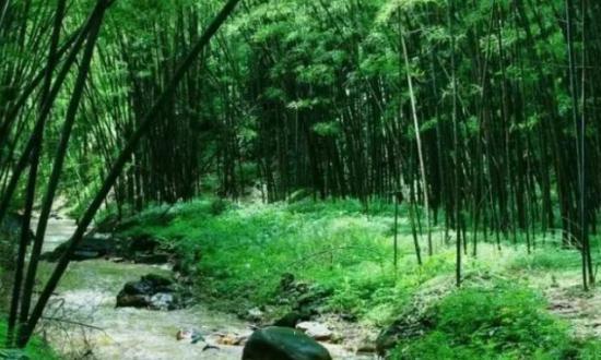 """数百年的传统历史,满目青翠的林子中,竟盛产抗癌功效的""""神水"""""""