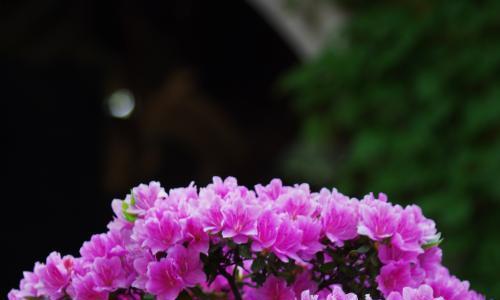 秋季换盆有讲究,做得好,来年花开更鲜艳