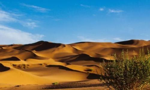 """新疆""""最神秘""""的沙漠,还有生存了上千年的绿植,原因至今不明"""