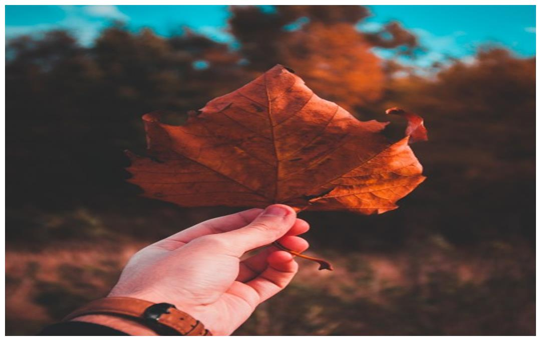 """生肖虎:多长个心眼,1月21特别重要,是你一生中最大""""好运"""""""