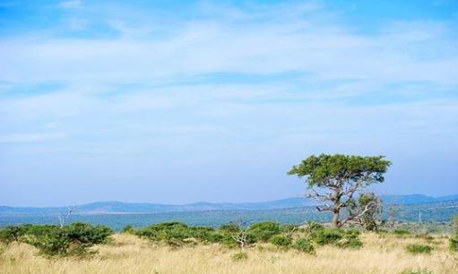 非洲南非:在德班的私人游猎营地,感受近距离观看野生动物
