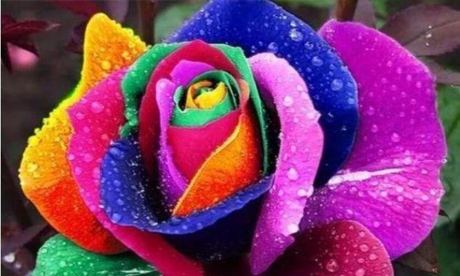 居家就养几款花卉,叶片油绿株型美,空气清新上档次