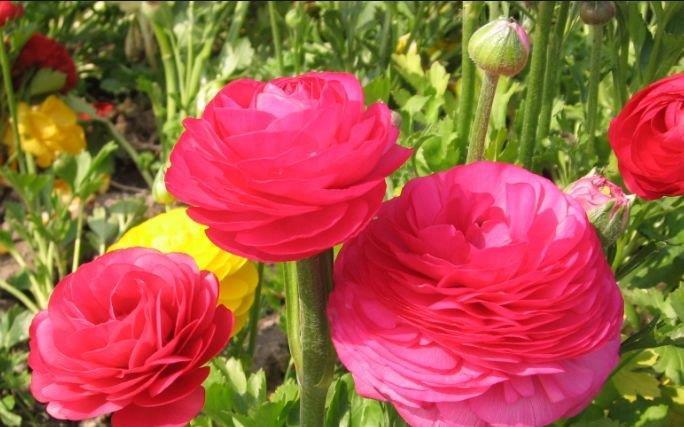 阳台养花,不妨养有4款植物,株型美,开花奇特,见过吗?