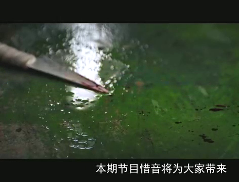韩国人拍的中国城,这部电影刷了十几遍,依旧压抑的喘不上气