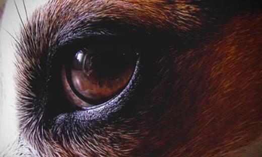 心理学:第一眼你认为哪只是狗的眼睛?测你看人的眼光究竟有多准