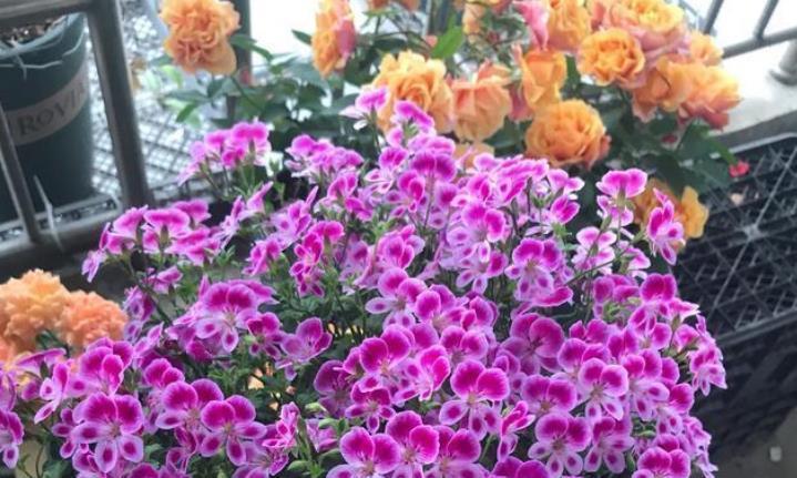 4种花适合夏天养,开花爆盆花期长,花香四溢飘满屋,美爆了