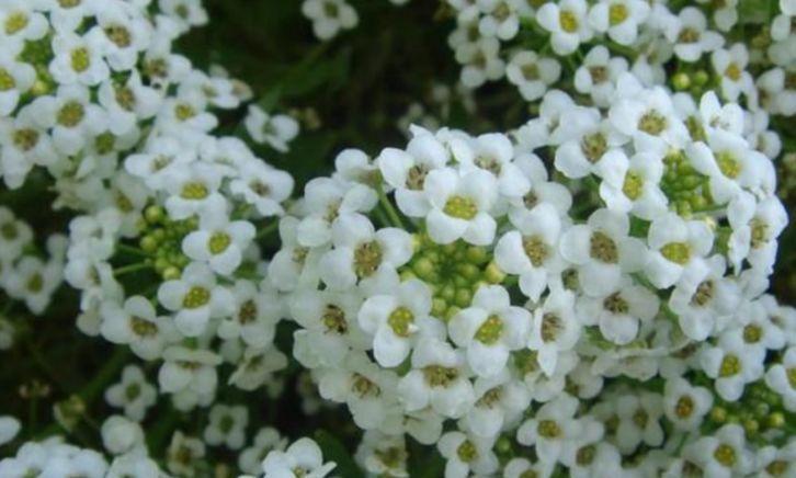 4种花是花卉中的佼佼者,花朵硕大,开的灿烂,家里开成一片花海