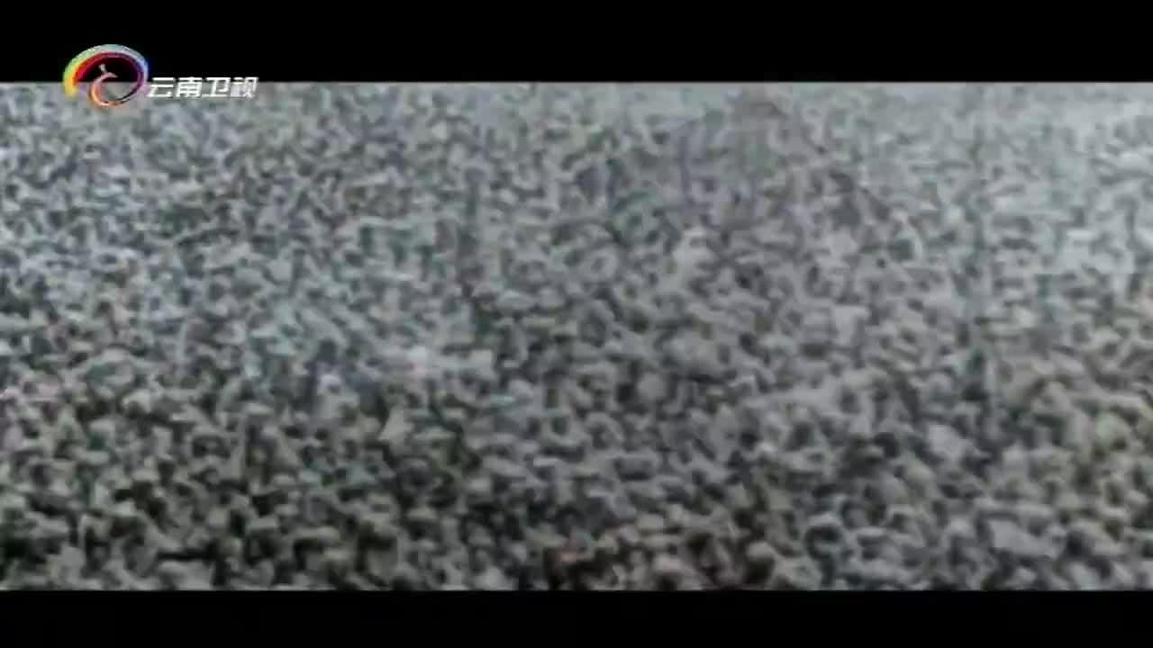 纪录片:盟军战俘要求日军遵守《日内瓦公约》,日军一句话回绝
