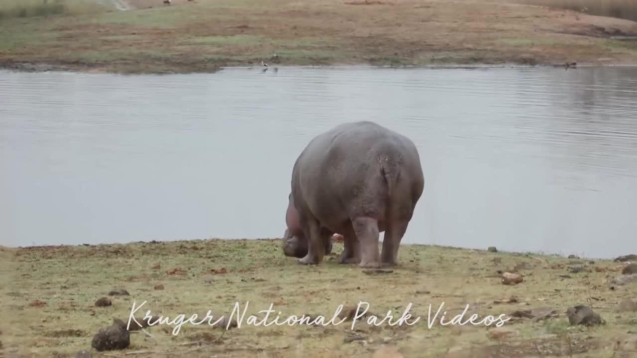 非洲草原风光,象群地位无法被撼动!吃素,但吨位大很少被猎杀