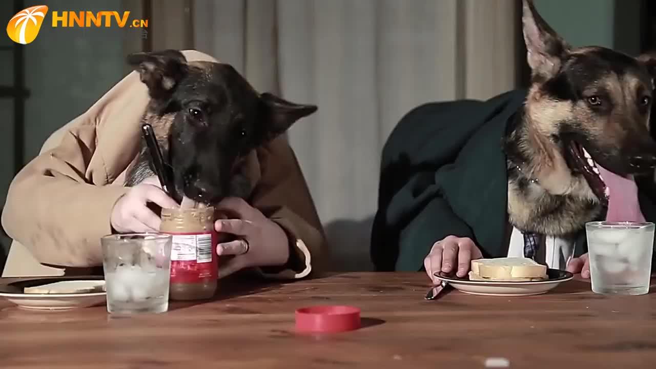"""两只狗狗一起吃晚饭,吃的人模人样,这才是""""仪式感""""!"""