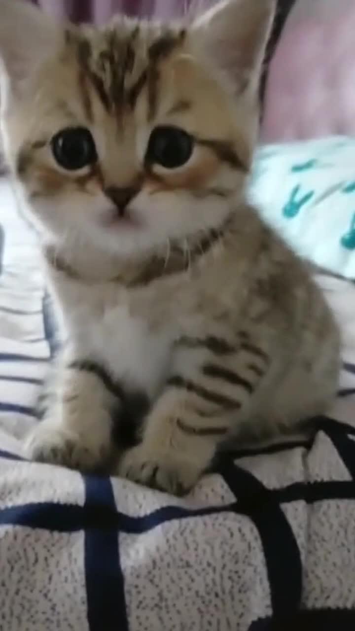 小奶猫到新家可怜呆小无助的小眼神