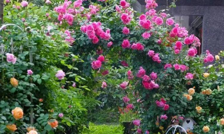 家养这些植物,阳台开出花海,花香易打理,养在客厅美极了