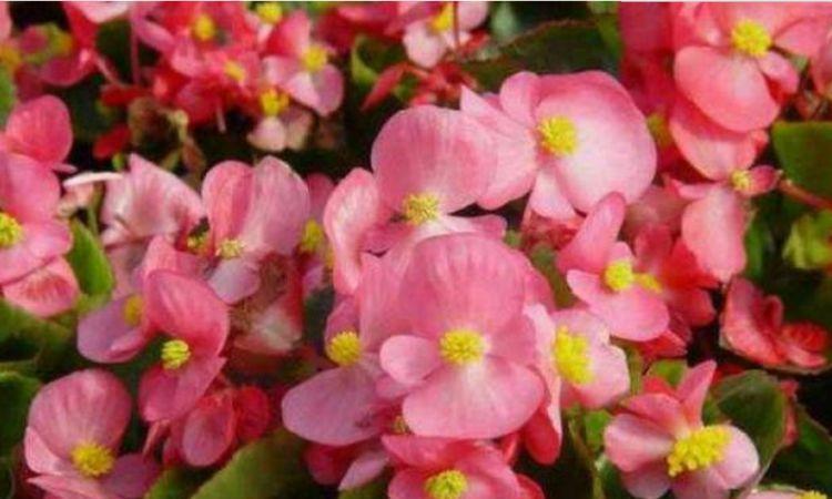 """家里就养4种花,好养又漂亮,火起盆阳台美成""""花海""""!"""