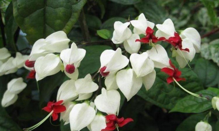 养花就养4种花,好养易活花量大,开花漂亮花期长