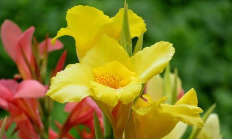 养花就养个花期长的,花大色艳,开花多长期长