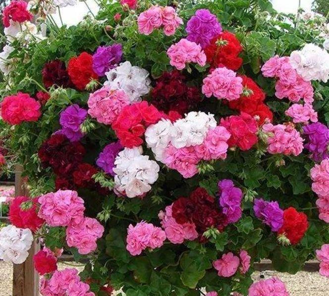 4种花好养易活,旺财又养人,养庭院,十里飘香