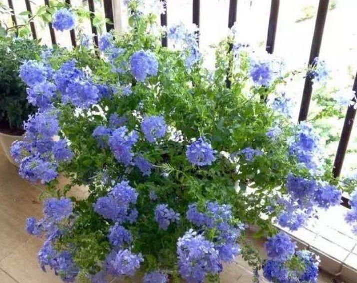 最受欢迎的4种花,好养易开花,花朵美艳,随便一养成花海